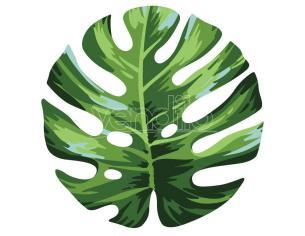 Palm Leaf Microfibra Round Telo Mare Asciugamano